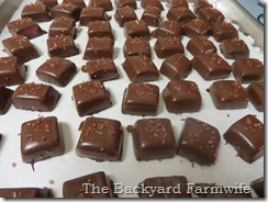 dark chocolate salted caramels - The Backyard Farmwife
