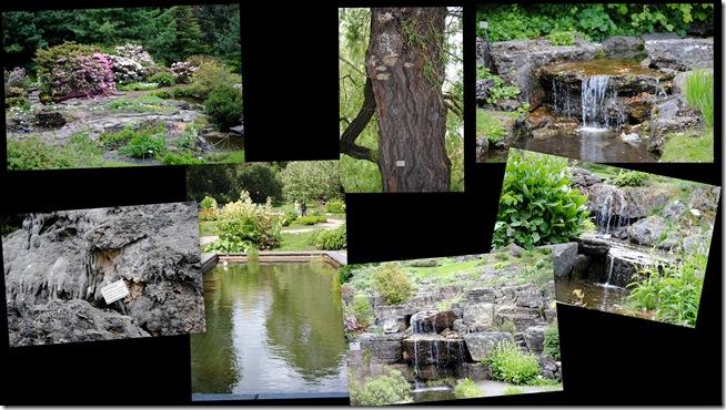 2011-05-29 Botanisk have 20113