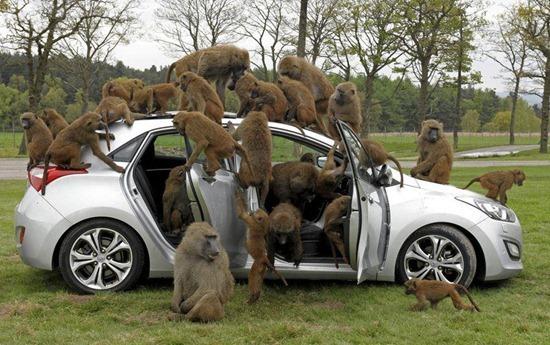 macacos Huyndai 00