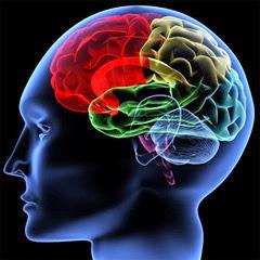 brain-regions-100414-02