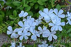 Glória Ishizaka - Jardim Botânico Nagai - Osaka 41