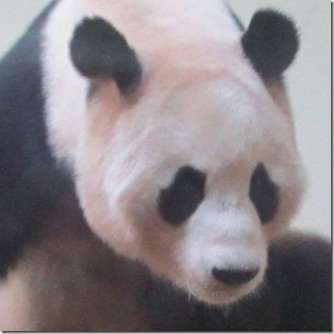 panda-he