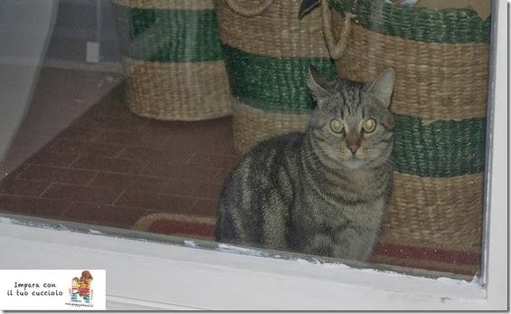 ansia-gatto