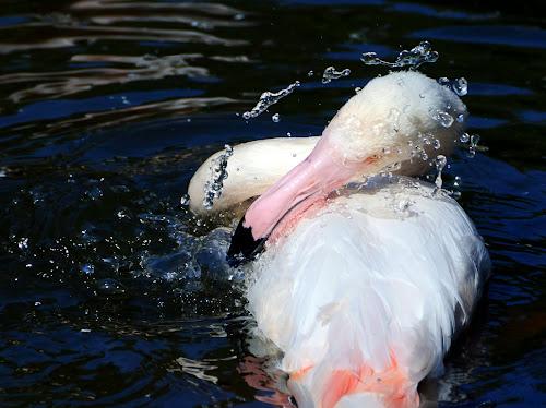 Luud_Heck-Flamingo.jpg