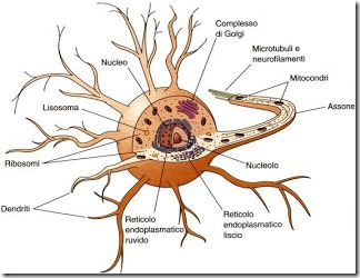 neurone_scientifico