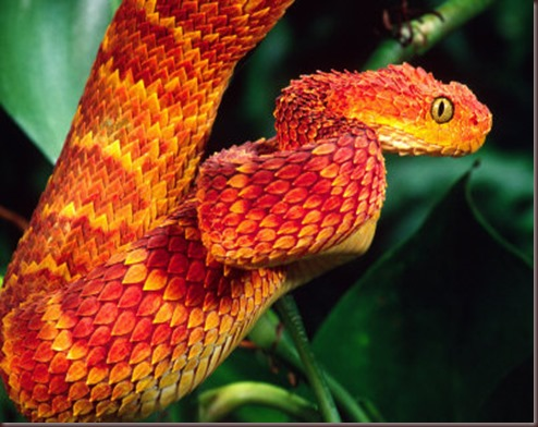 Amazing Animals Pictures The Bush Viper (7)