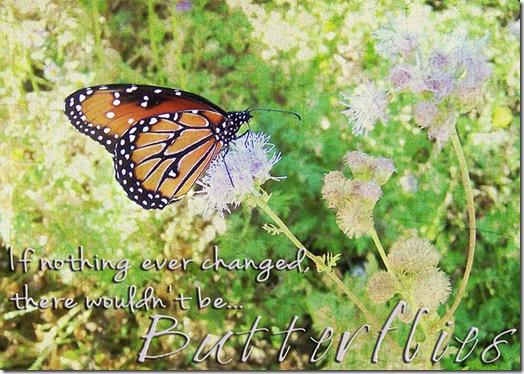 Change_Butterfly