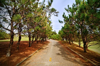 Pines on Both Sides at Camp John Hay's Golf Course