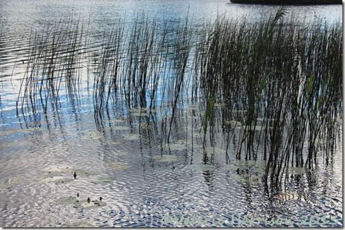 15-reeds