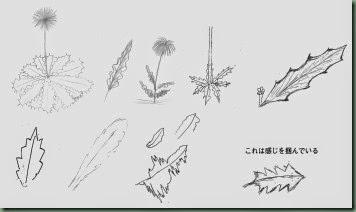 タンポポの葉を描けない_sample