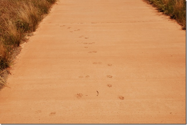 05-04-13 C Pa'Rus Trail Zion 051