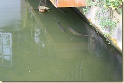 kolam ternakan
