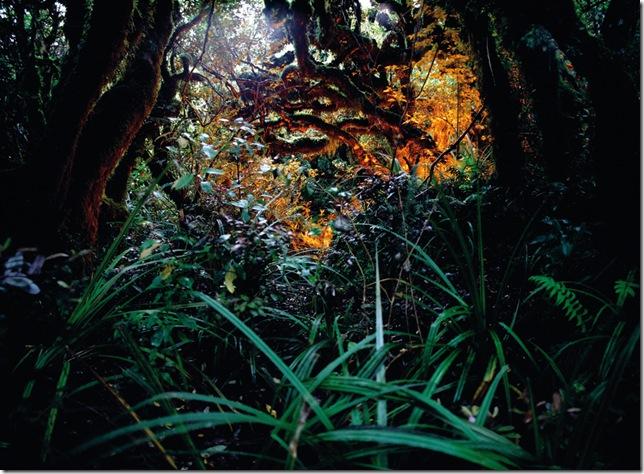André Wagner_2006_Rainforest_110x150cm