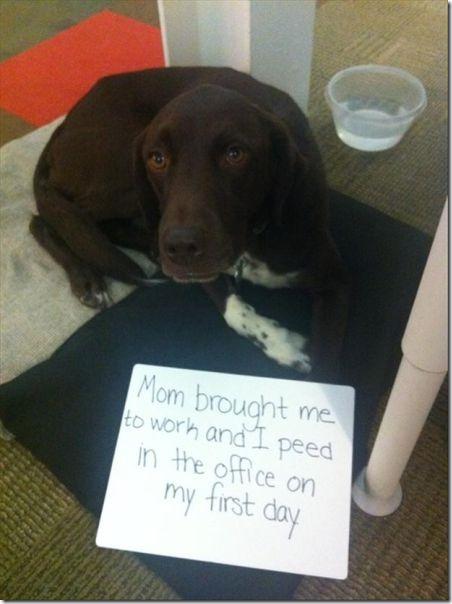 dog-shaming-bad-16