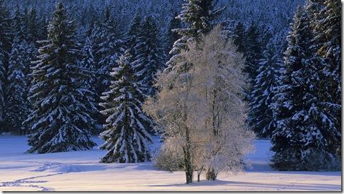 imagini desktop iarna
