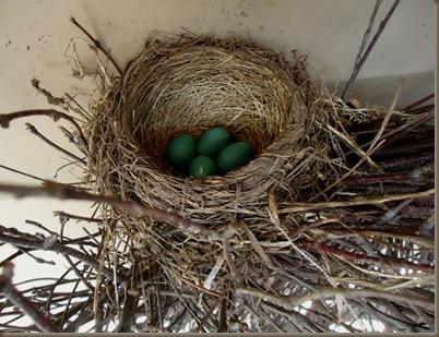 Robins nest 1