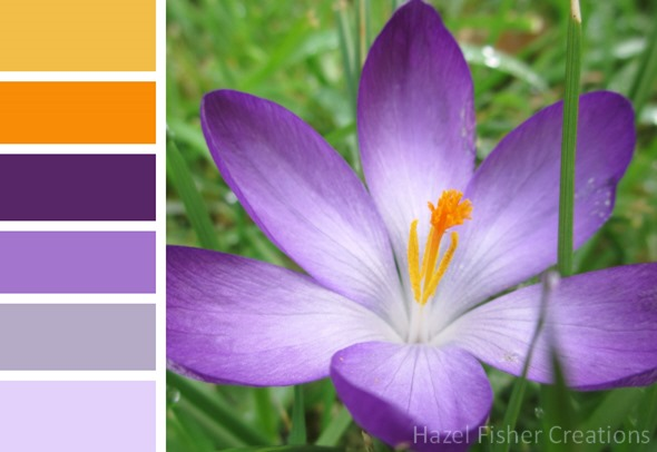 015 colour palette purple crocus