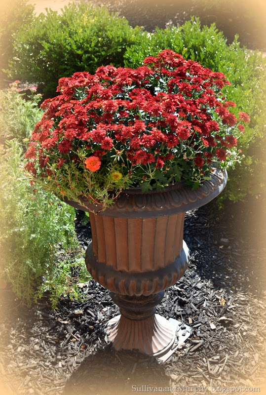 urn of mums