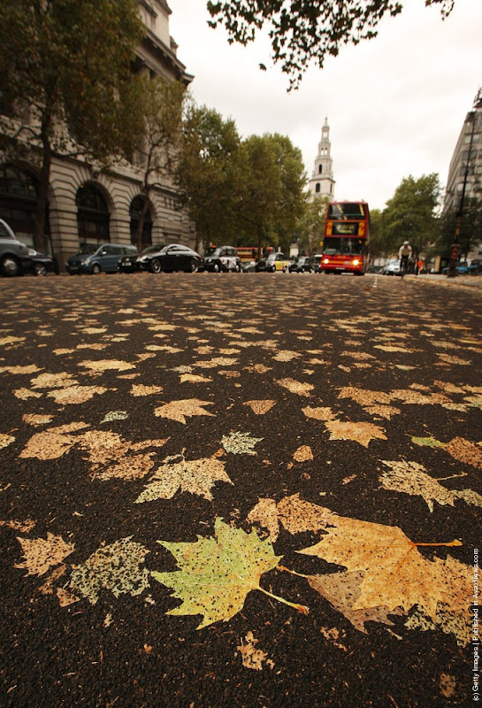 leaves-carpet-5