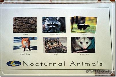 nocturnalsortingactivity2