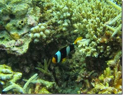 馬爾地夫 野餐島 浮潛 (10)