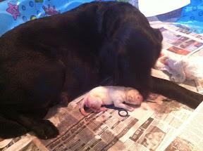First born!
