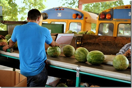 watermelons 11 0705 (135)