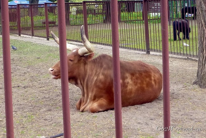 Kiev_Zoo_26-1.jpg