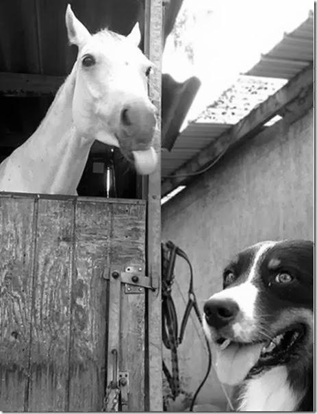 funny-animal-photobomb-14