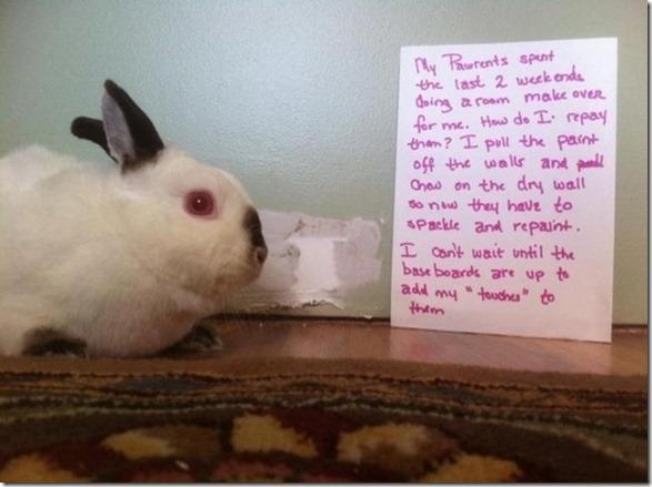 bunny-rabbit-shaming-18