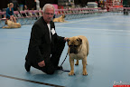 20130510-Bullmastiff-Worldcup-0451.jpg