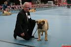 20130510-Bullmastiff-Worldcup-0451.jpg