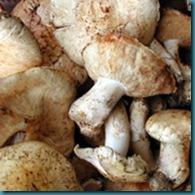 expensive-mushroom