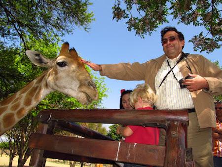 Girafe la Lion Park Johannesburg