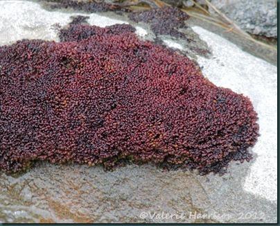 18-moss-or-lichen