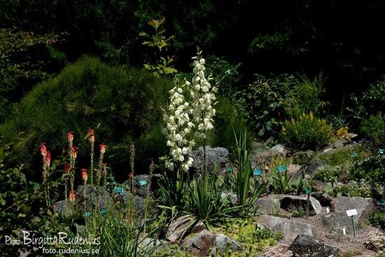 lund_20110706_botaniska