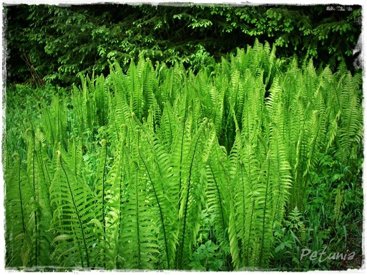 Grønn glede 2