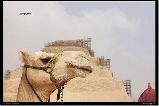 Egypt Day 11_03-11