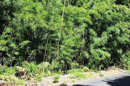 15. Padurea de bambus Hana road.JPG