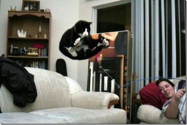 cats-timed-perfectly-15