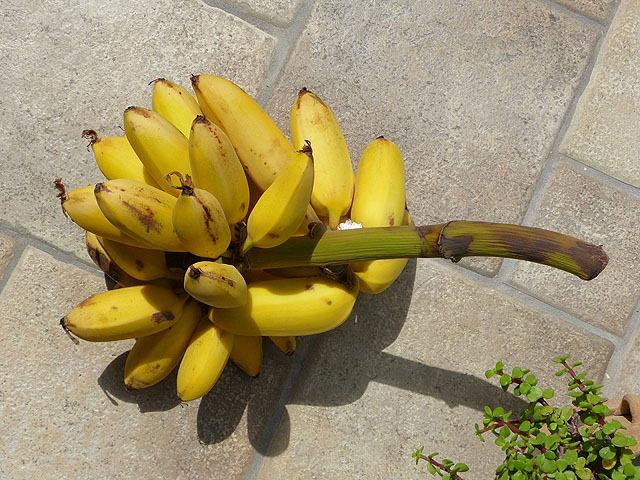 bananen_1_01