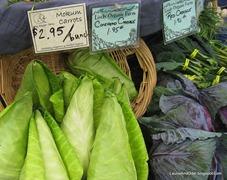 Conehead cabbage