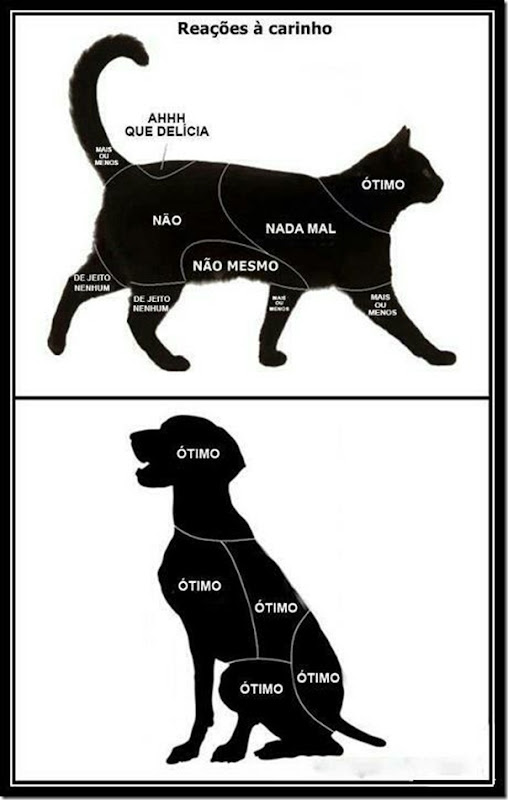 Reação ao carinho de um gato e um cachorro