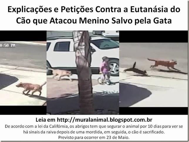 Explicações e Petições Contra a Eutanásia do Cão