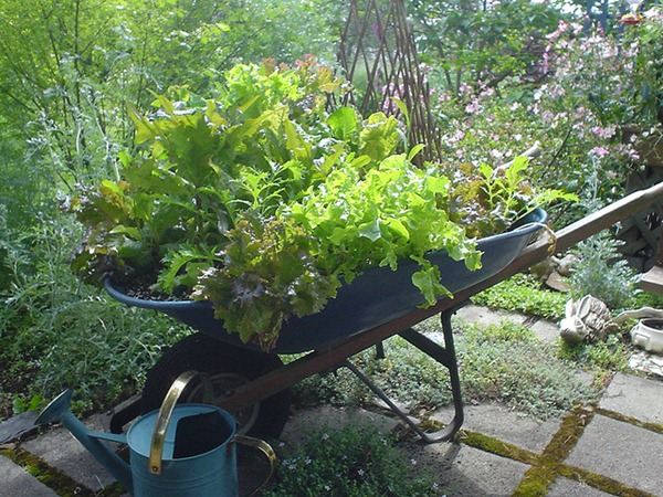 Wheelbarrow-veggie planter