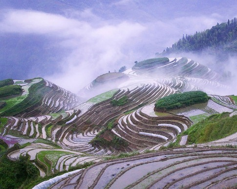 Rice terraces in early morning mist, Guangxi Province, China.