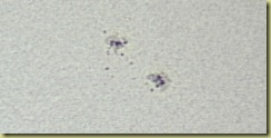 Spots 30 June 2011 b JPEG