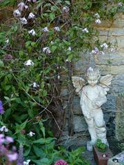 garden june 2011 013