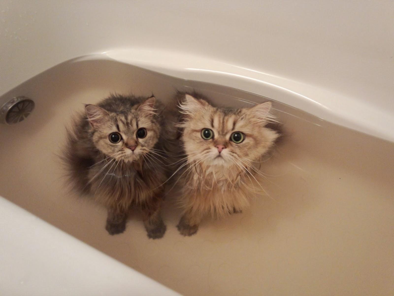 お風呂ペルさん