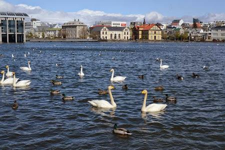 Pranz in Islanda: Lebede islandeze